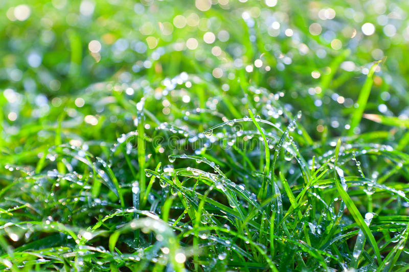 Download Morting Dew On The Grass Stock Photography - Image: 16661332
