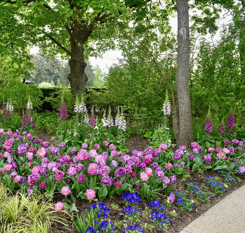 Morton Arboretum Flower Garden #1 photo stock