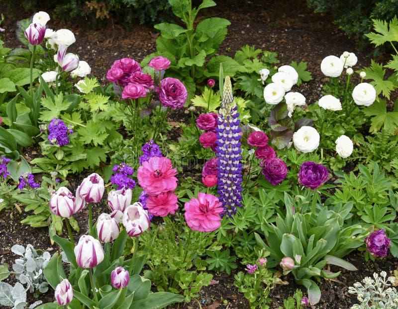 Morton Arboretum Flower Garden #2 stockfotos