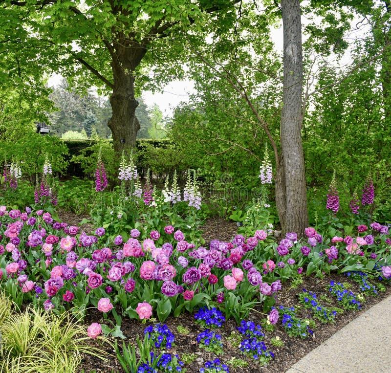 Morton Arboretum Flower Garden #1 stock foto