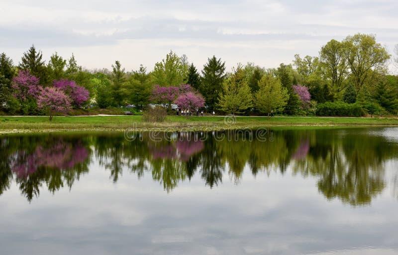 Morton Arboretum Pond und eine Reflexion stockbild