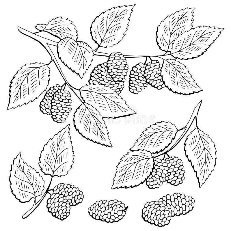Morwowy graficzny czarny biel odizolowywający jagody gałąź nakreślenia ilustracji ustalony wektor ilustracja wektor
