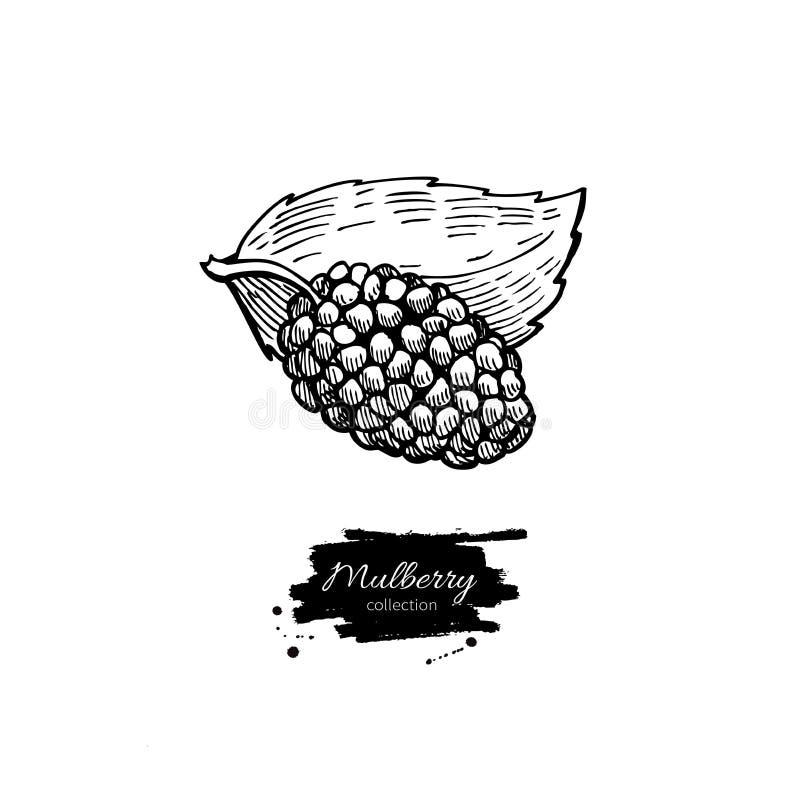 Morwowy superfood rysunek Odosobniona ręka rysująca ilustracja wektor