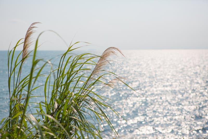 Morza i trawy tło zdjęcie stock