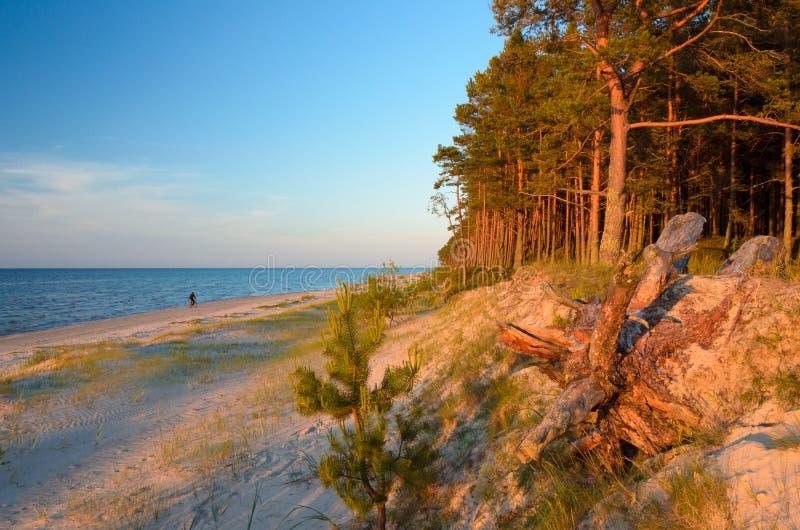 Morze Bałtyckie brzegowy Latvia zdjęcie stock