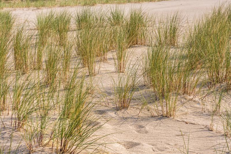 Morze Bałtyckie plaża z plażową trawą fotografia royalty free