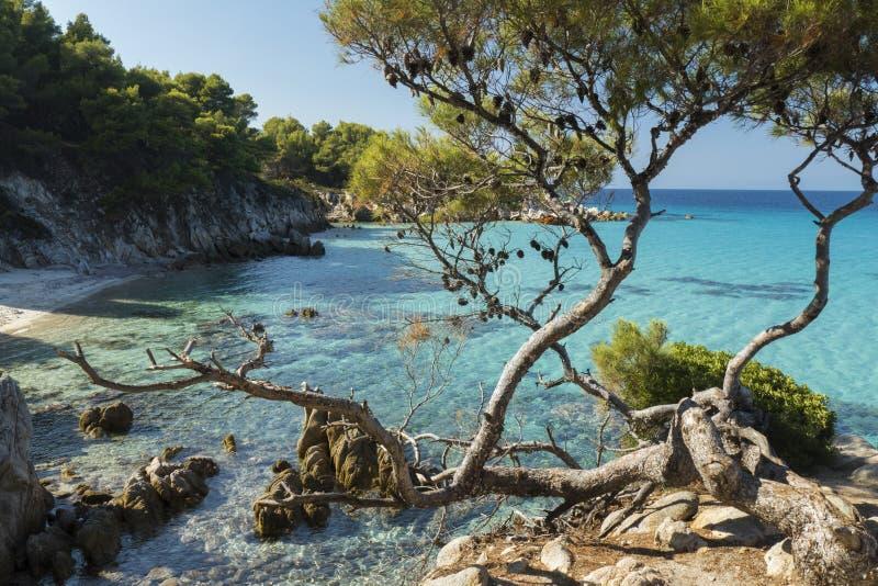 Morze Egejskie i sosny zdjęcie royalty free