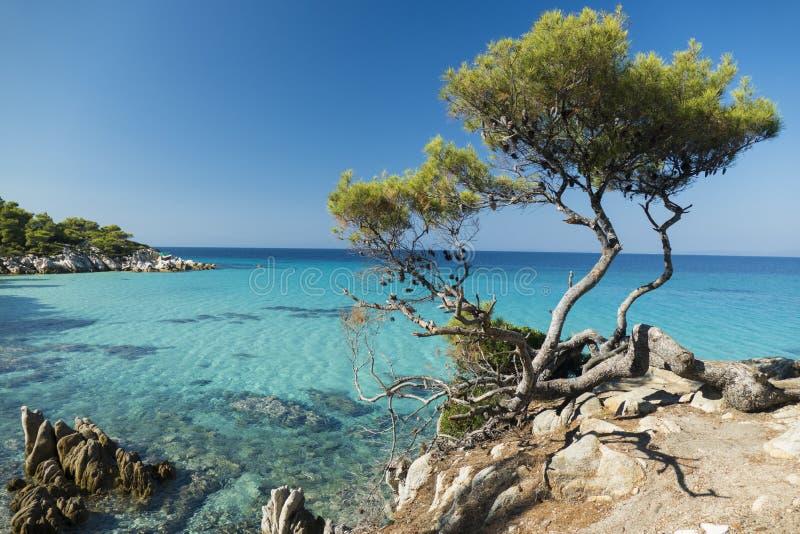 Morze Egejskie i sosny fotografia royalty free