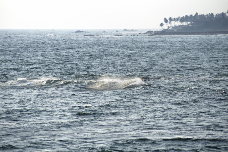 Morze, fala i drzewka palmowe, Galle, Sri Lanka fotografia royalty free