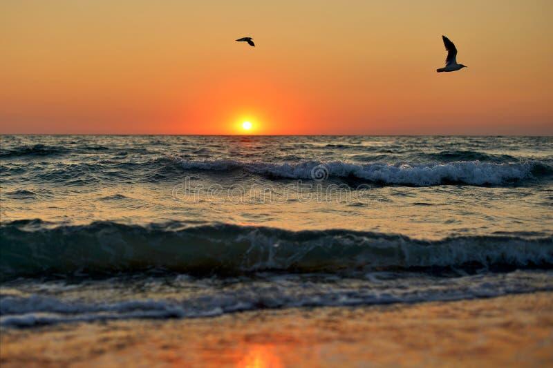 Morze fale i latań seagulls na tle czerwony zmierzch obrazy royalty free
