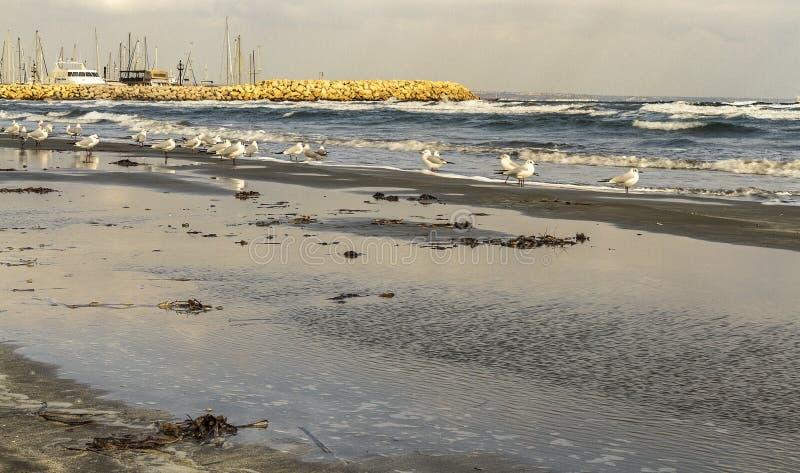 Download Morze Galasy W Larnaca Ciborach Obraz Stock - Obraz złożonej z ocean, woda: 65225119
