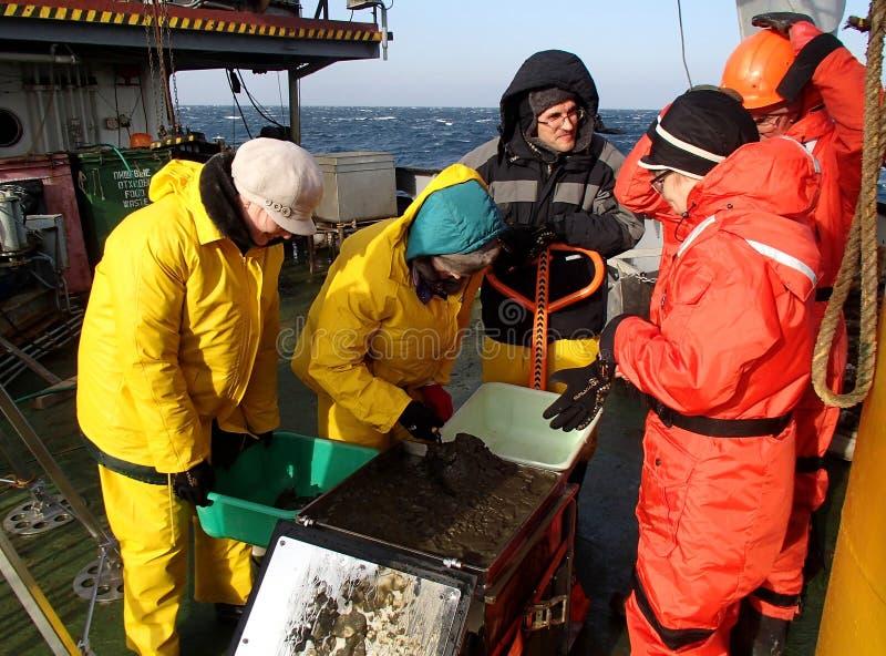 Morze Japonia, Rosja, Listopad/- 30 2013: Naukowowie przetwarza próbkę głębokowodny błoto catched z pudełkowatym sednem fotografia royalty free