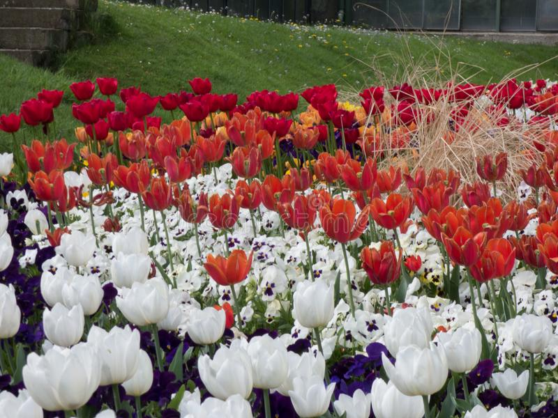 Morze kolorowi kwiaty obraz royalty free