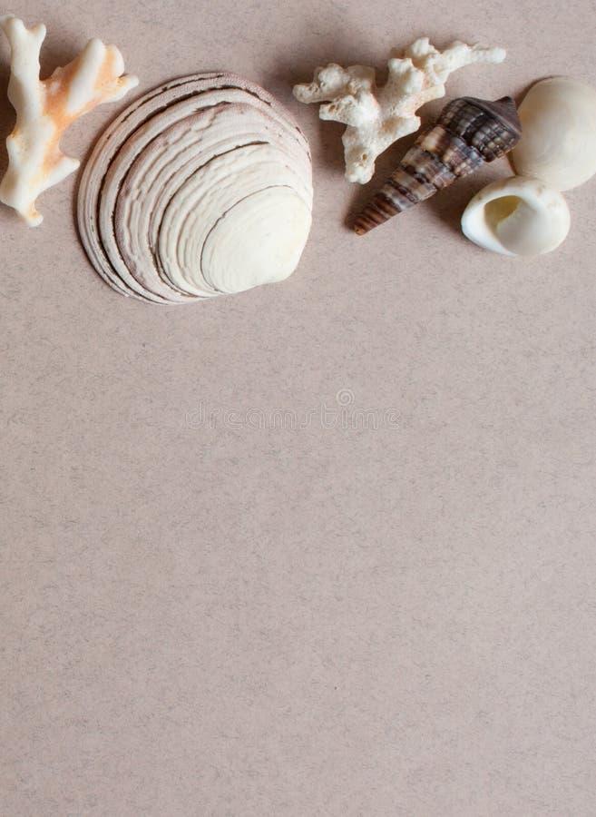 Morze korali i kamieni tło fotografia royalty free