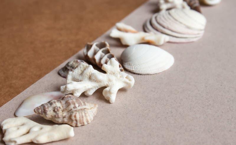 Morze korali i kamieni tło zdjęcia stock