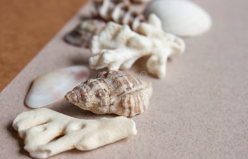 Morze korali i kamieni tło obraz royalty free