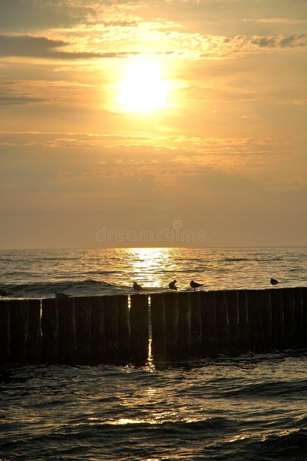 Morze, słońce i seagulls, zdjęcia royalty free