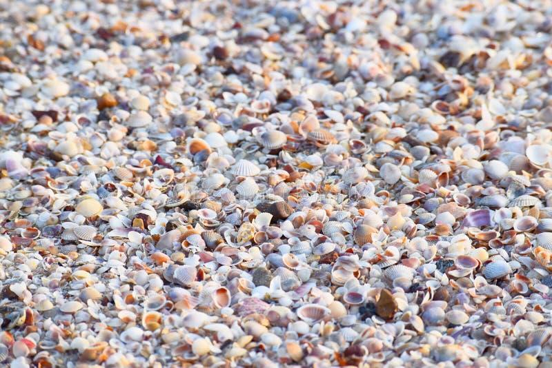 Morze skorupy - Abstrakcjonistyczny Morski tło fotografia stock