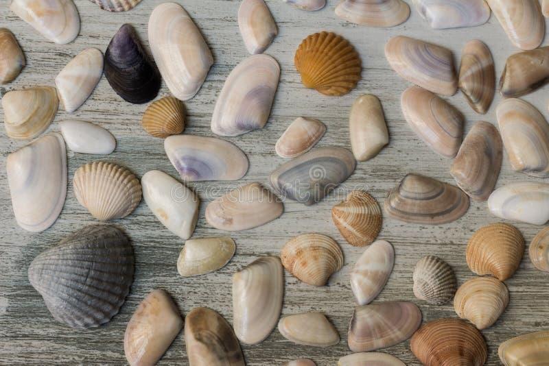Morze skorupy i mussel obraz royalty free