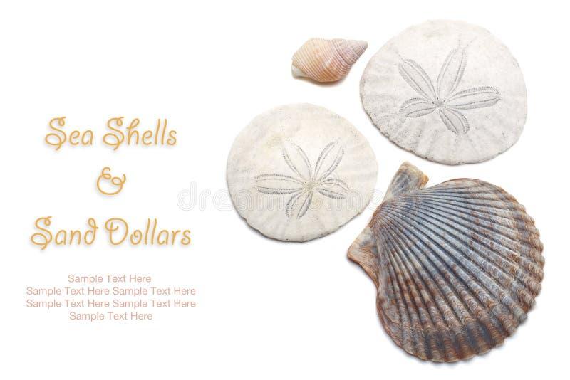 Morze skorupy i piasków dolary odizolowywający na białym tle zdjęcia royalty free