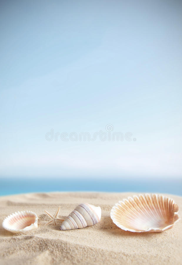 Morze skorupy na piaska tle zdjęcie stock
