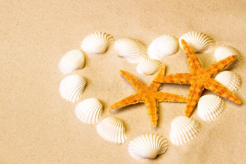 Morze skorupy z piaskiem jako tło obraz stock