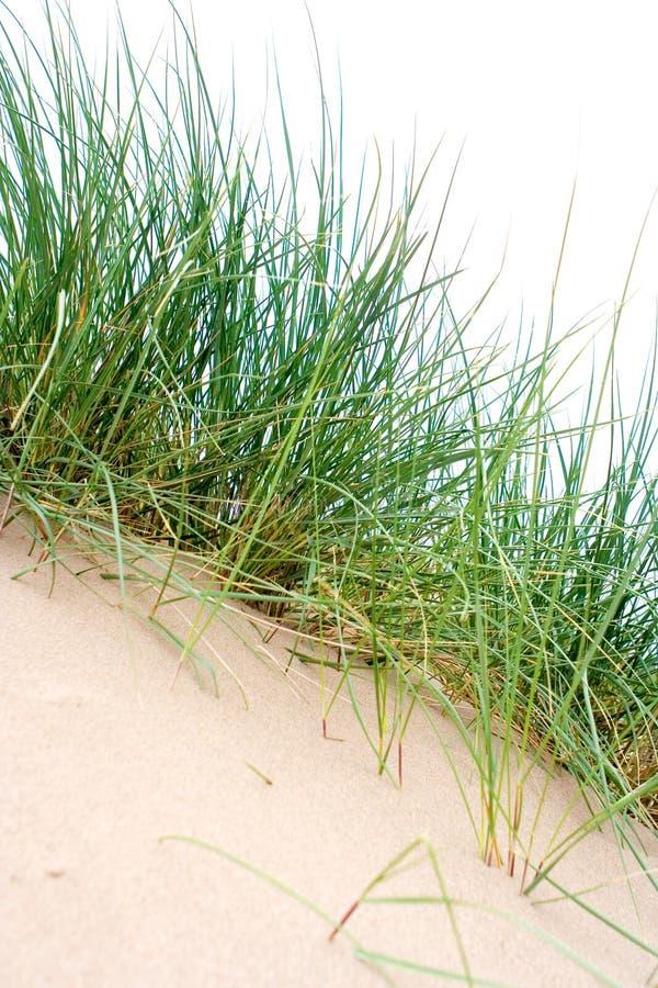 morze trawy kępy zdjęcie royalty free