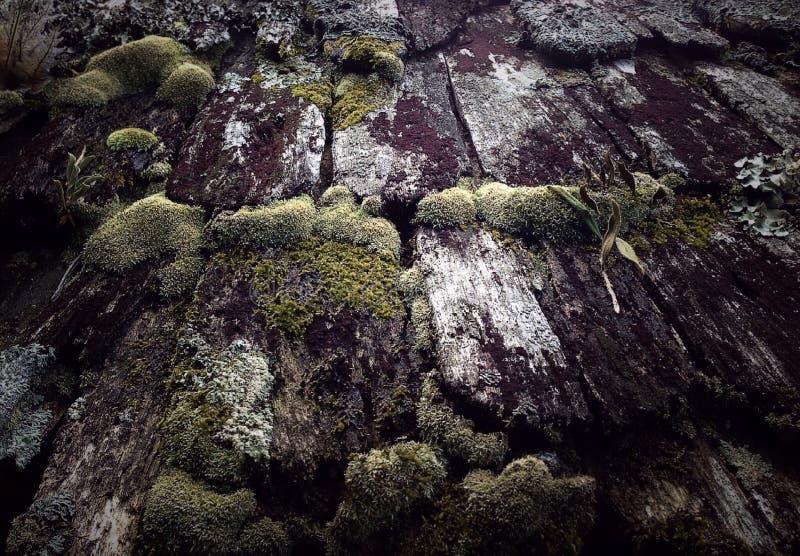 mos stockfotos