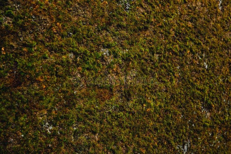 Mos als achtergrond groen op oude antieke muur gedempt licht royalty-vrije stock fotografie