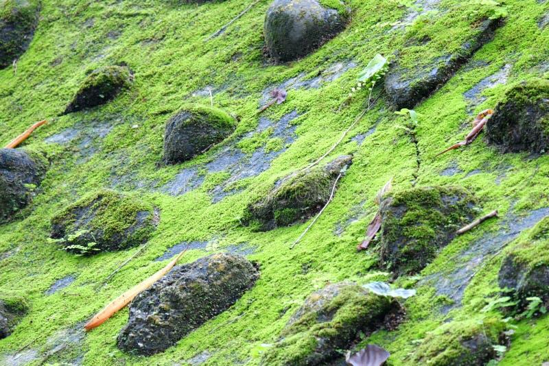 MOS auf dem Felsen lizenzfreies stockfoto