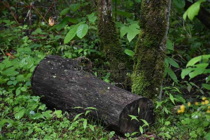 Mos behandelde Bomen in het Rokerige Berg Nationale Park stock afbeelding