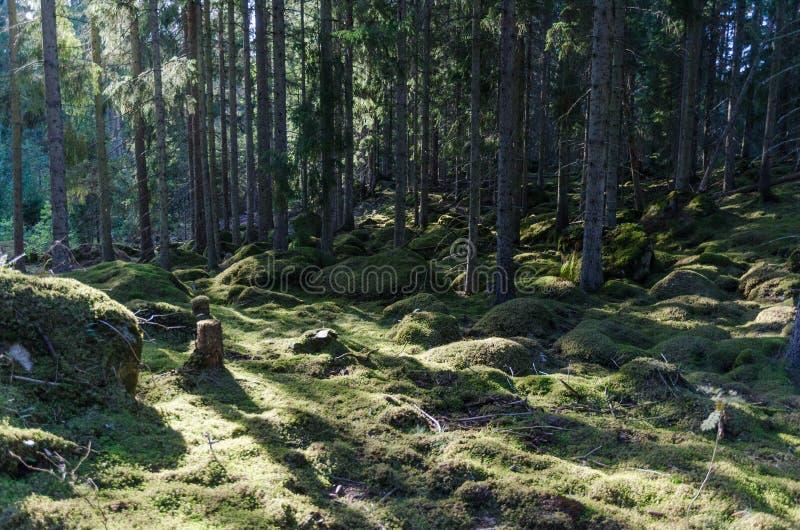 Mos behandelde bosvloer stock afbeeldingen