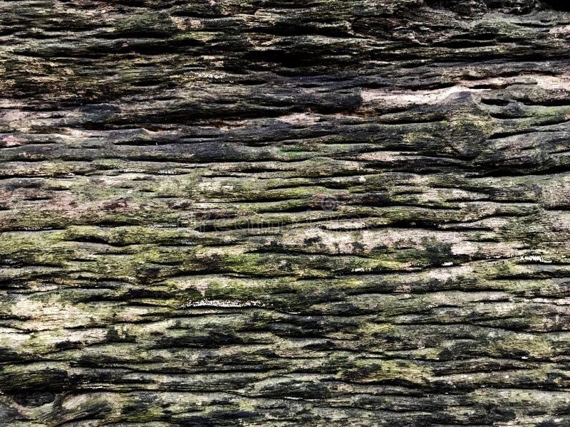 MOS en el de madera viejo foto de archivo libre de regalías