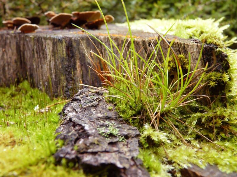 Mos en Gras het Groeien in Bos op de Macro van de Boomstomp dicht omhoog stock fotografie