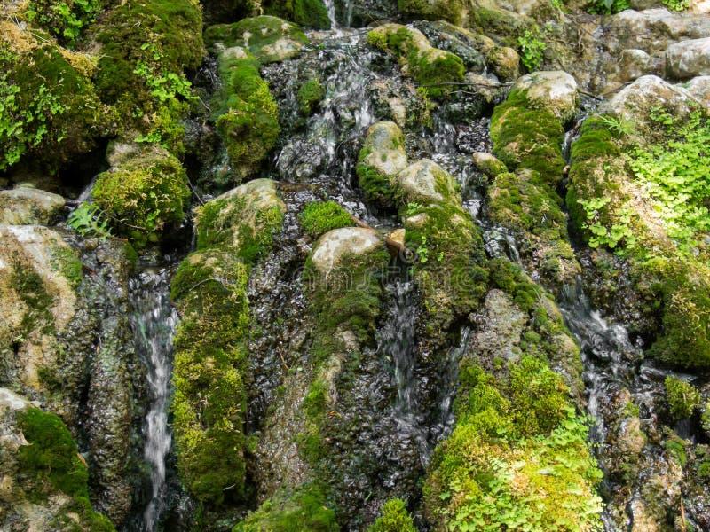 Mos en gras, water die over rotsen stromen stock afbeeldingen