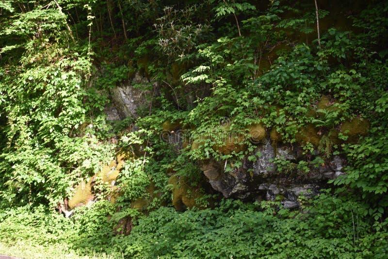 Mos en Klimop behandelde rotsen in het Rokerige Berg Nationale Park stock afbeeldingen