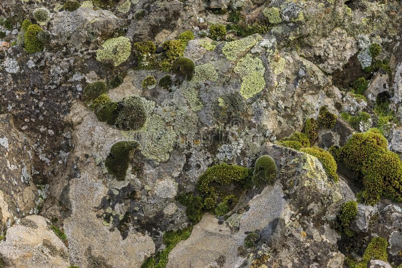 Mos en korstmos op een rots stock fotografie