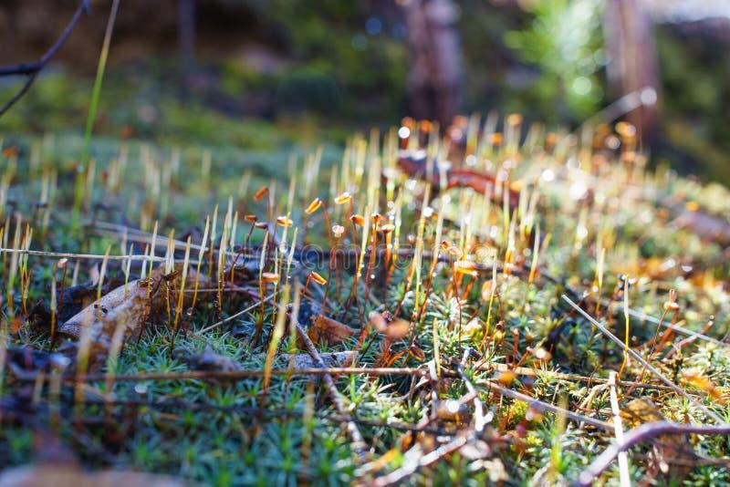 Mos in het bos na regen onder zonlicht stock fotografie