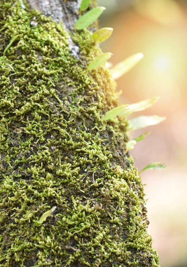 mos na drzewie zdjęcie stock
