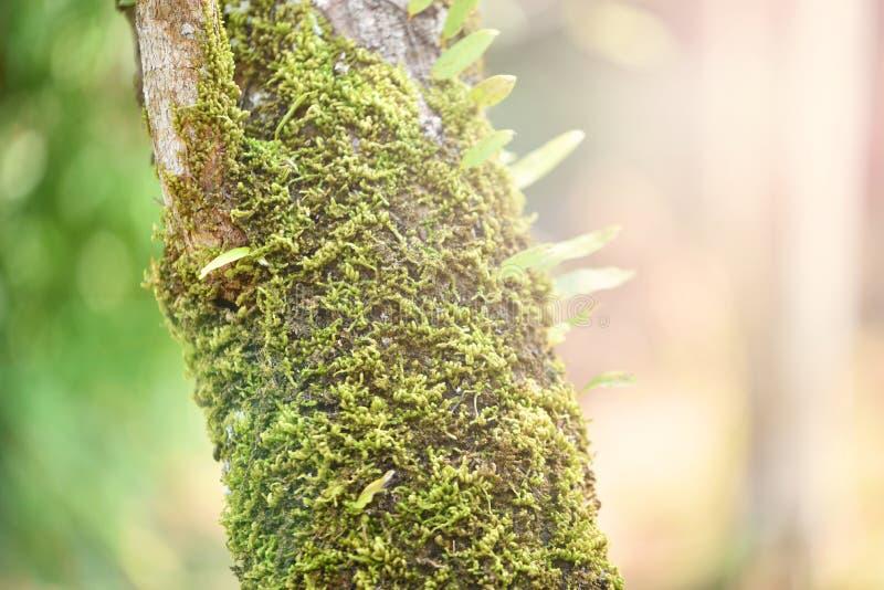 mos na drzewie zdjęcie royalty free