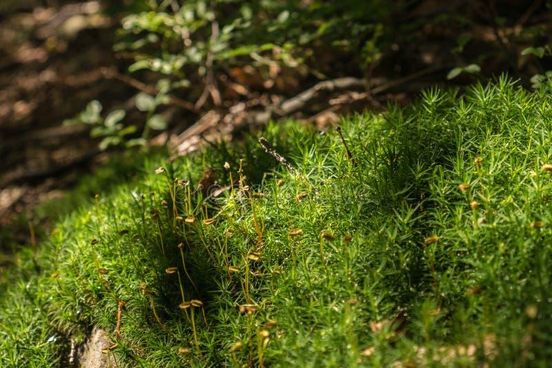 Mos op een boomboomstam in het bos royalty-vrije stock foto's