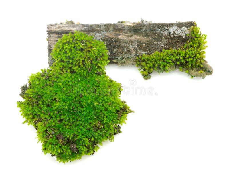Mos op een houten stomp op witte achtergrond royalty-vrije stock afbeeldingen