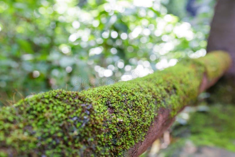 Mos op hout in het bos stock foto's