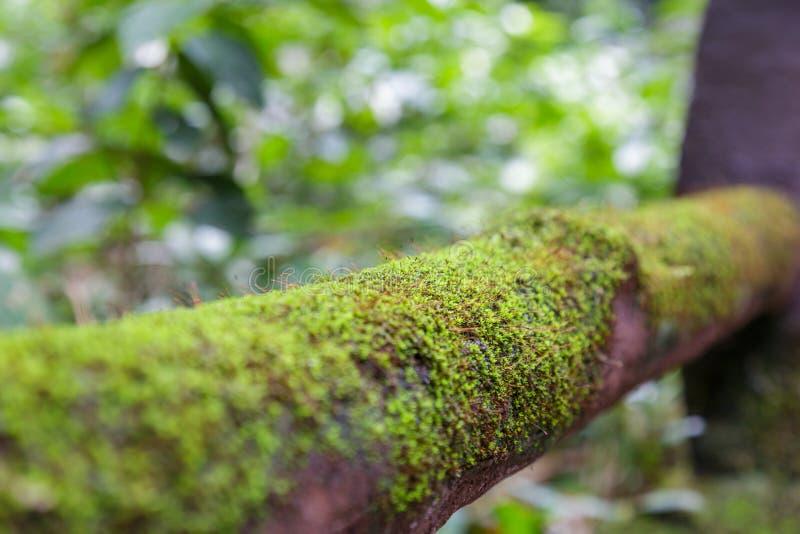 Mos op hout in het bos royalty-vrije stock foto