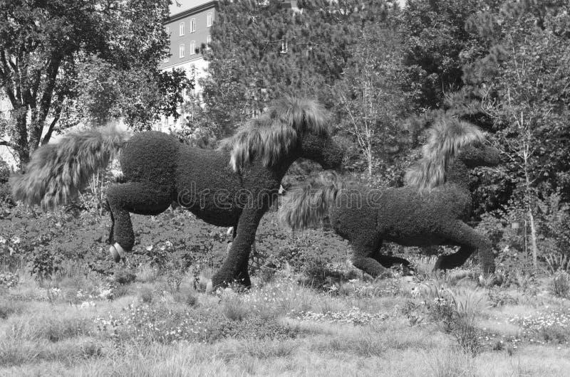 MosaïCanada 150 skärm av hästar royaltyfri fotografi