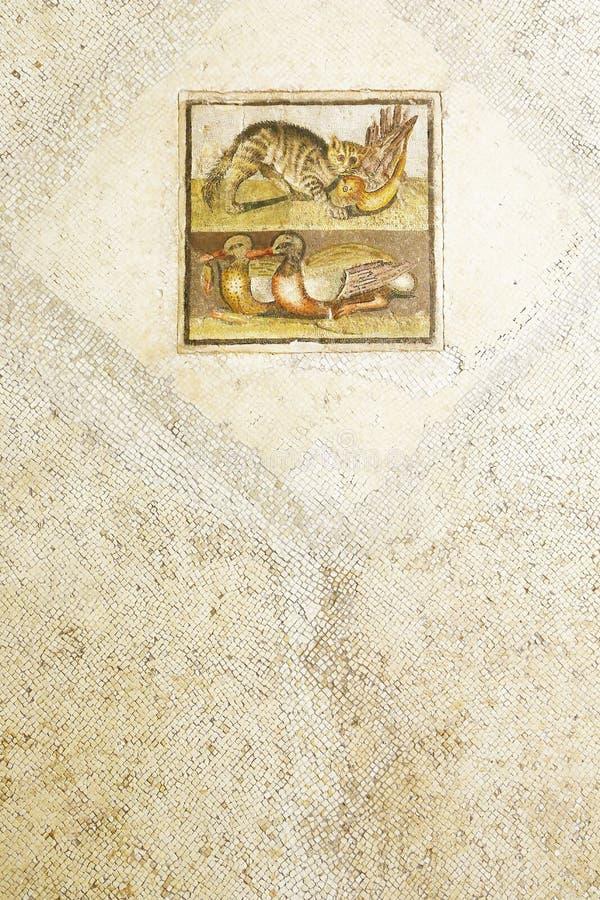 Mosaïque carrée romaine avec le chat et les canards images libres de droits