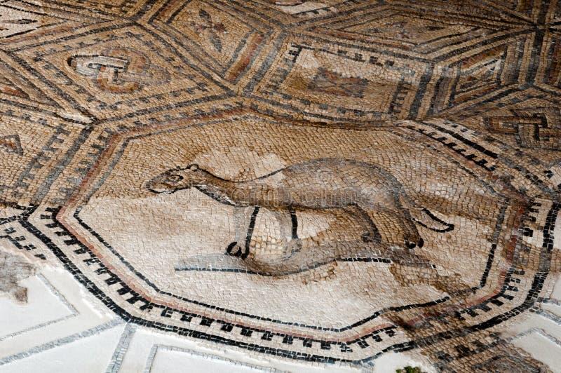 Mosaïques animales à la basilique d'Aquileia photos stock