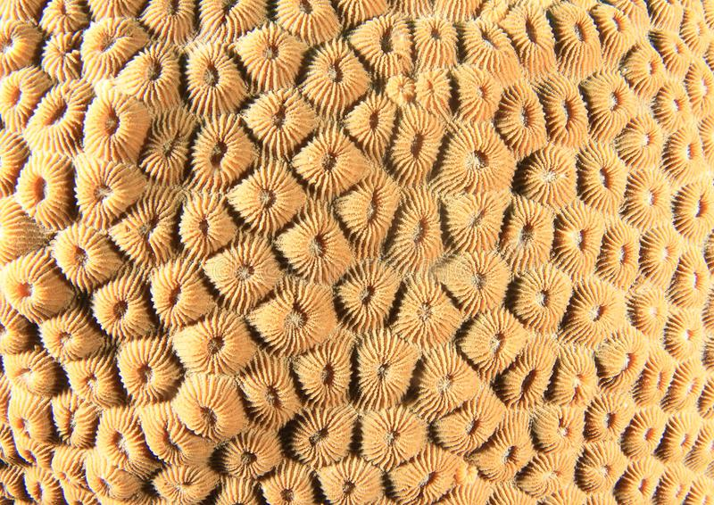Mosaic of hard coral - honeycomb coral stock photography