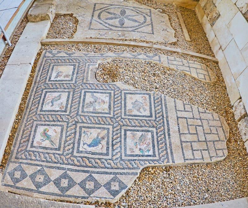 Mosaici degli uccelli in Roman Villa, Alessandria d'Egitto, Egitto fotografia stock