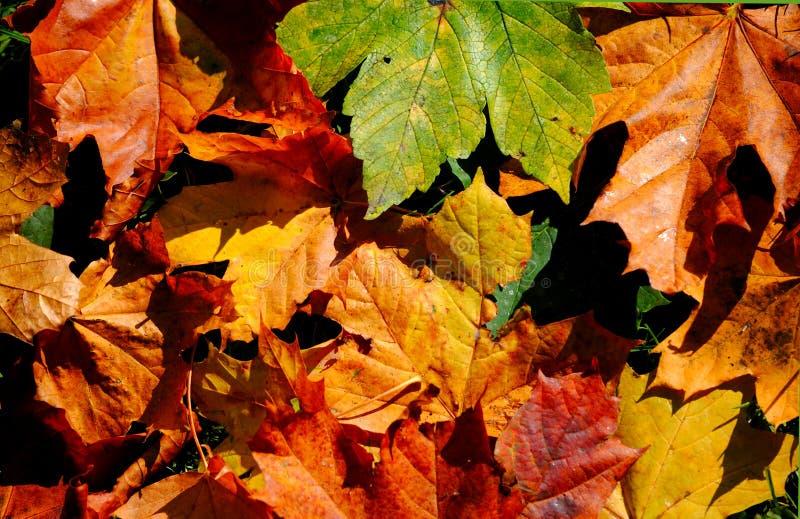 Mosaico del otoño imagen de archivo libre de regalías